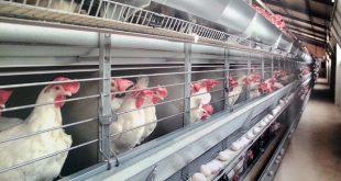 خرید قفس برای پرورش مرغ گوشتی