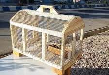 قفس کبوتر