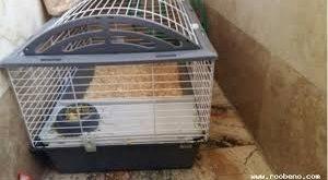 عرضه انواع قفس خرگوش