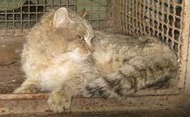 قفس گربه
