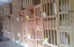 تولید قفس خروس لاری