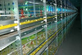 قیمت انواع قفس مرغ گوشتی