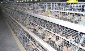 قفس فلزی مرغ