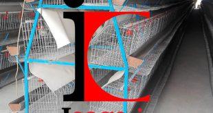 خرید و فروش قفس مرغ تخمگذار با بهترین قیمت